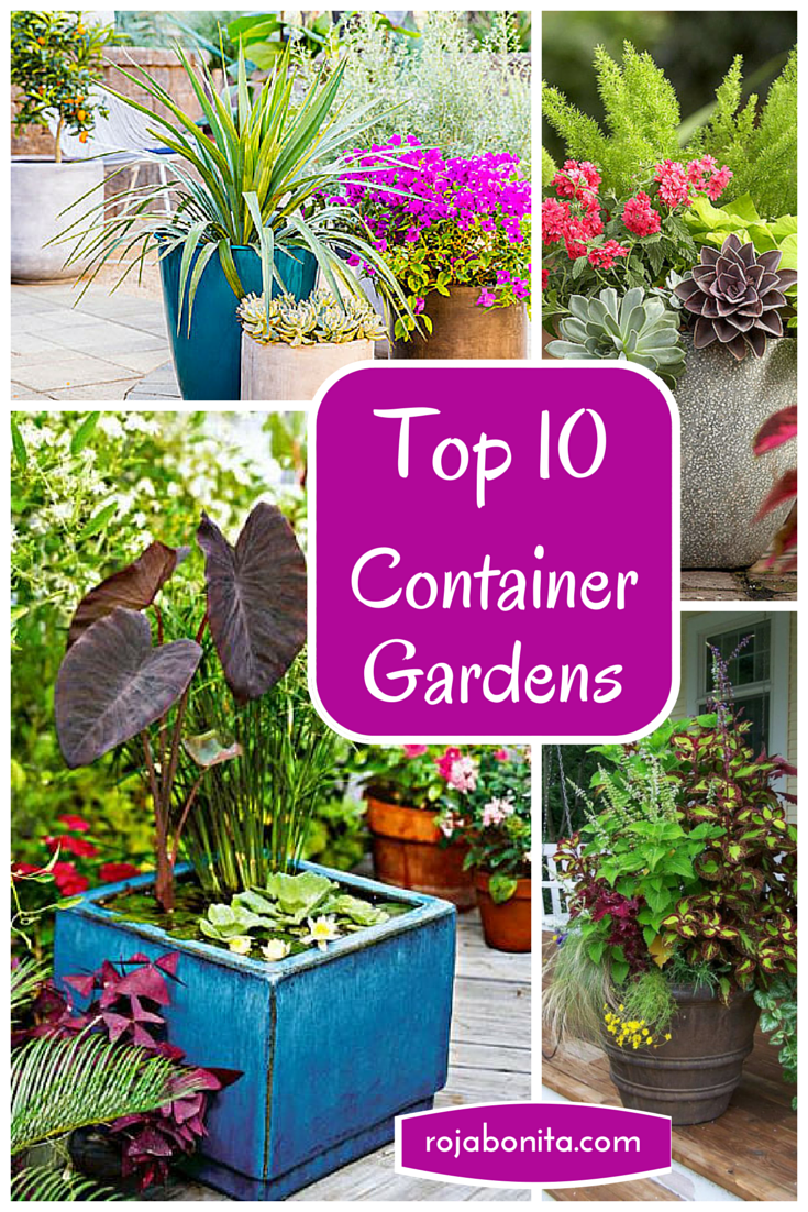 Top 10 Container Gardens For Your Patio