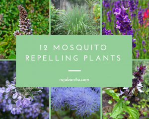 12 Gorgeous Mosquito Repelling Plants