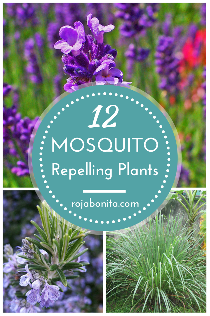 Dress up your patio with these 12 mosquito repelling plants