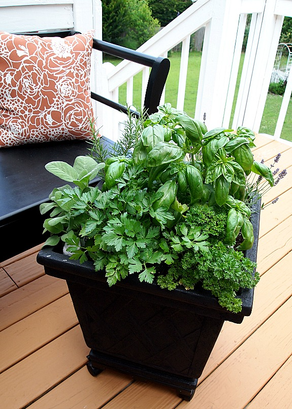 Top 10 container gardens for your patio rojabonita for Container herb garden