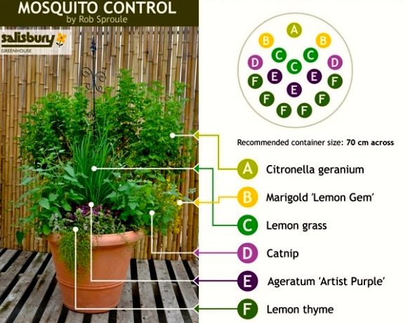Mosquito Control in One Pot | 10 Container Gardening Ideas