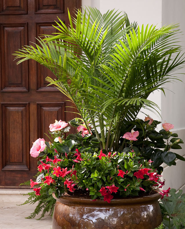 10 Container Gardening Ideas | Palm Tree and Tropical Flowers