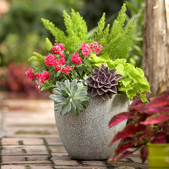 10 container gardening ideas texture exploration