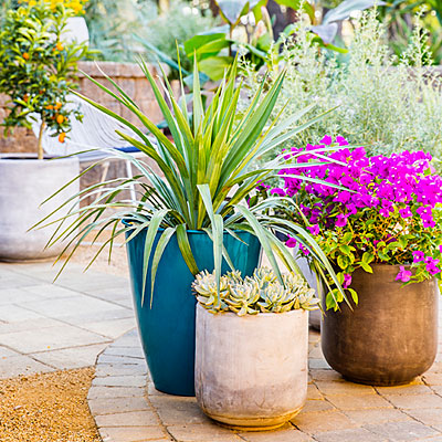 Trio of Color - Container Gardening