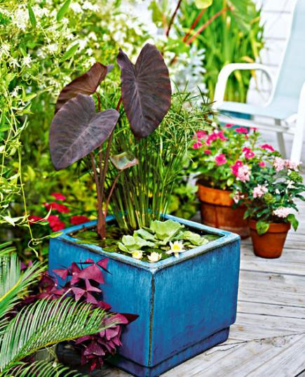 10 Container Gardening Ideas | Water Garden